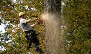 Tree Removal In Chesapeake Can Be Important For Safety